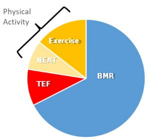 TDEE Chart